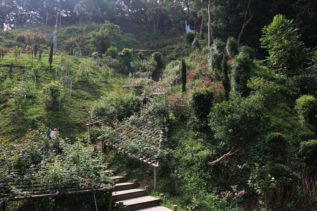 頭屋雅聞玫瑰森林 (12)