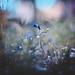 Flora by snegiri.bird