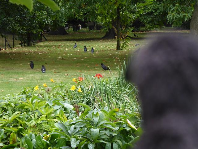 Minerva dreaming - Greenwich Park, London