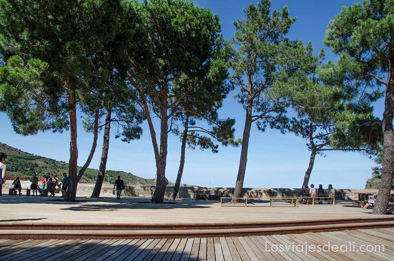 pinos en la región de argeles sur mer y Paulilles