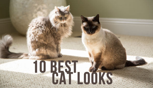 cat-looks-top-10