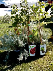 Plantación 19 septiembre 2015 Salburua