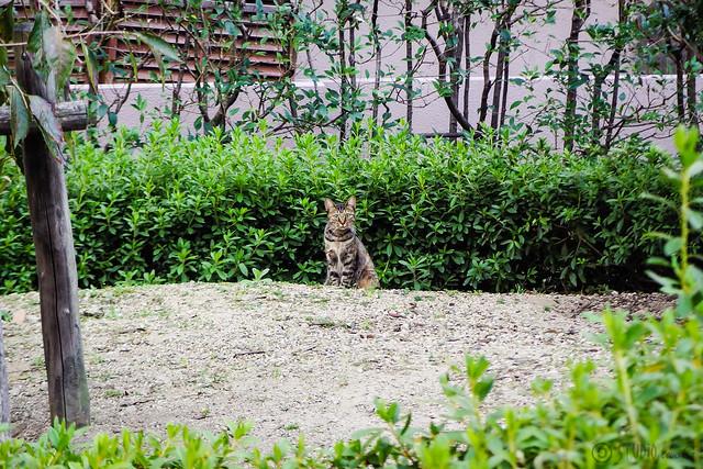 Today's Cat@2015-10-21