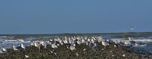 North Sea by Callantsoog NL