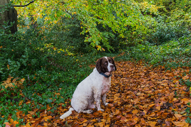 Posing in the autumn leaves