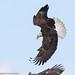 Sky Ninja by greg obierek