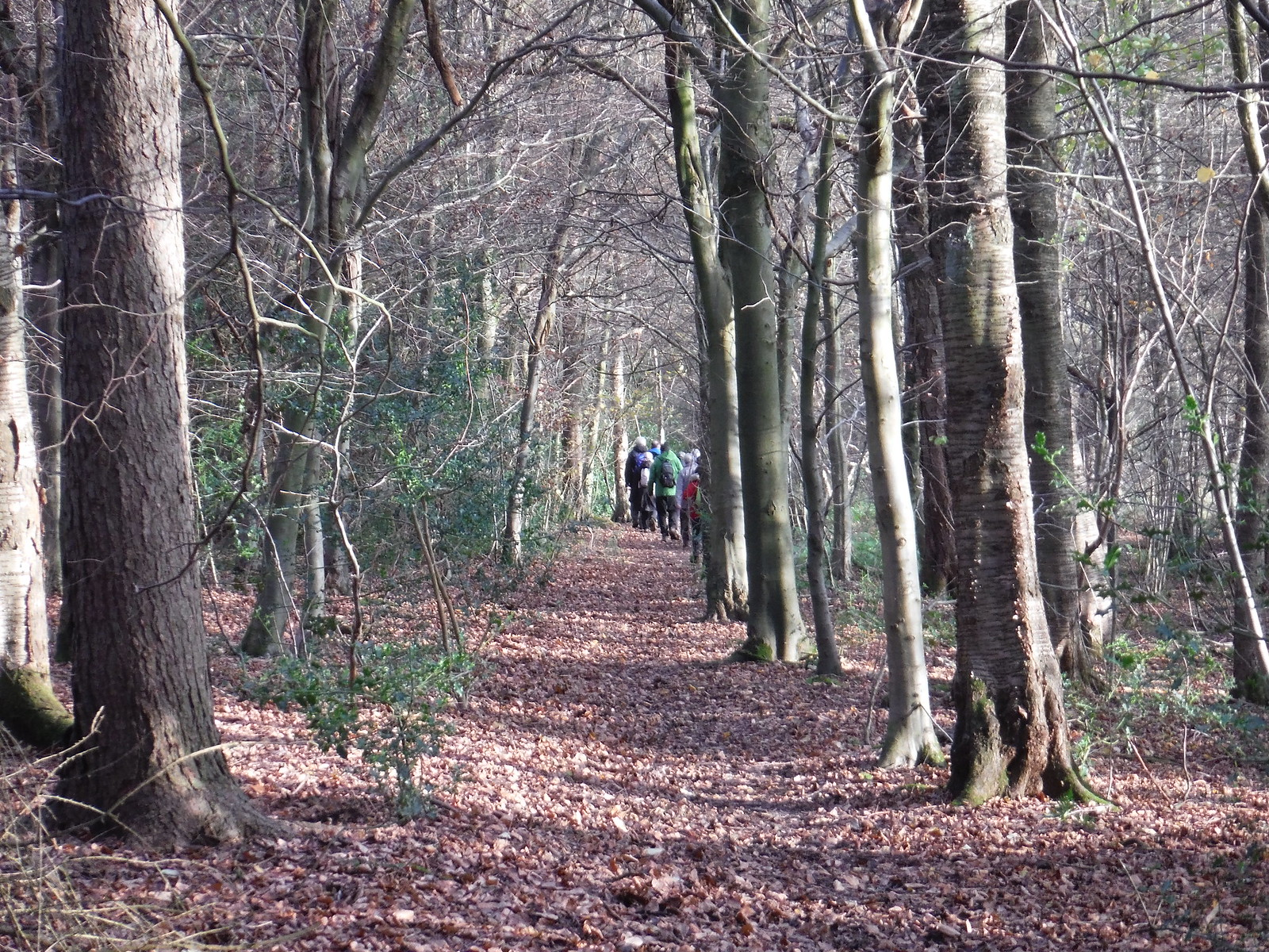 In Lownde's Wood SWC Walk 140a Wendover to Great Missenden