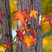 Changing Color by Mimi Ditchie