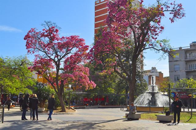 Plaza Liberad