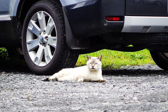 Today's Cat@2015-09-21
