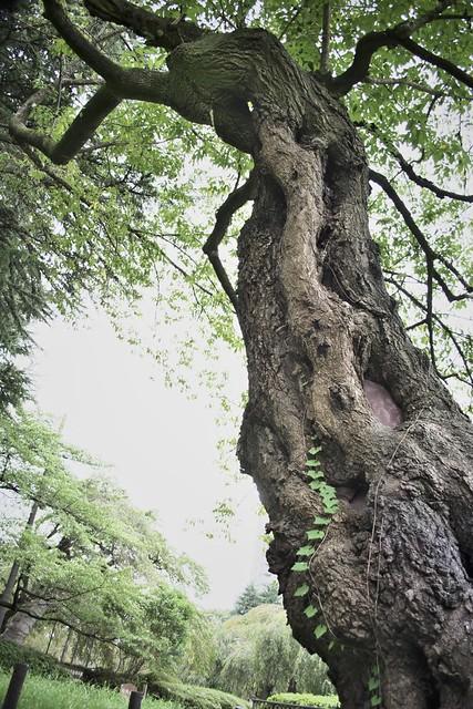 指令写真 028 仙台の山田さん 1
