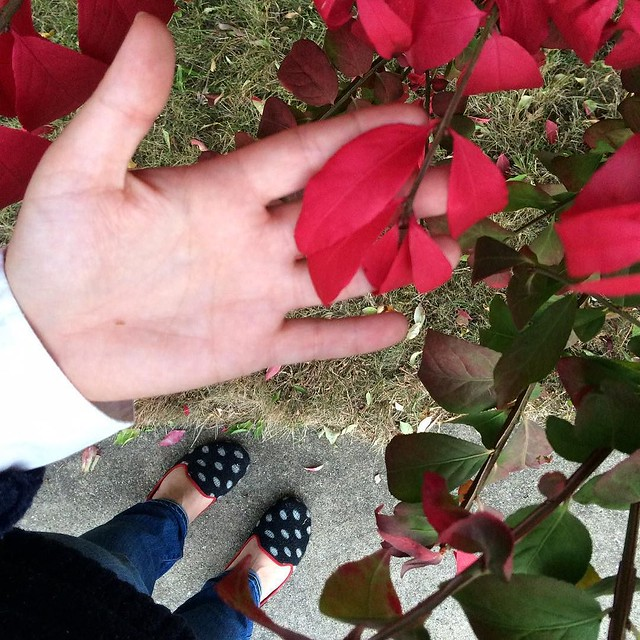 Every fall I am so thankful for our neighbor's burning bush #fromwhereistand