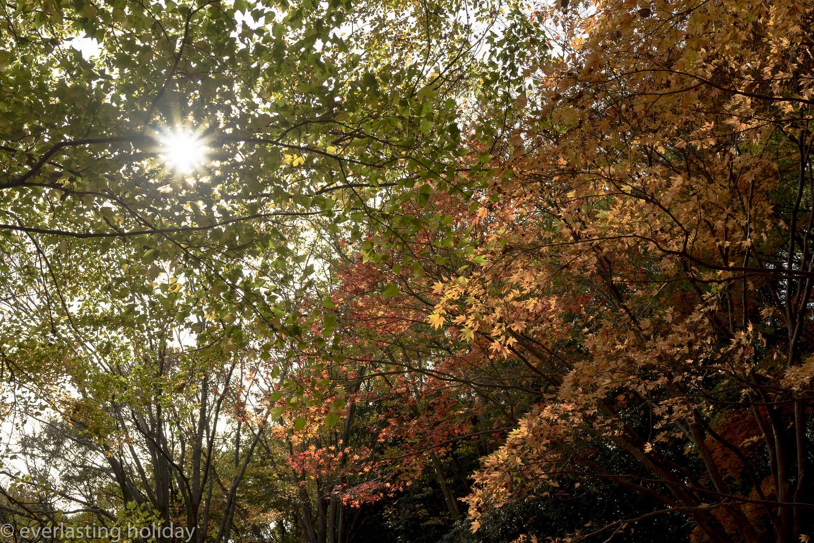 国営武蔵丘陵森林公園 Musashi Kyuryo National Government Park-0001