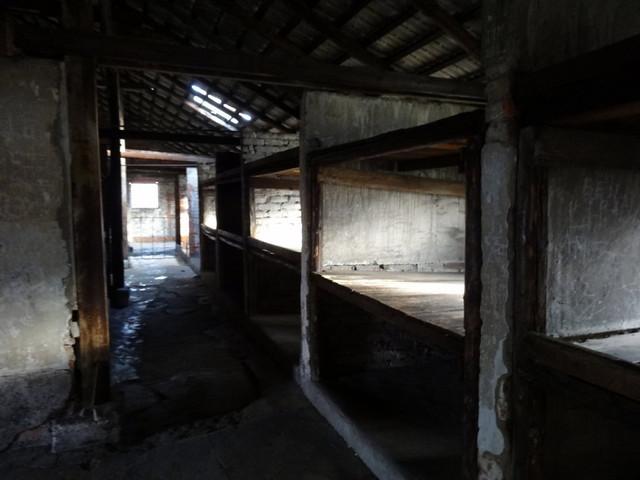 Auschwitz Birkenau (80)