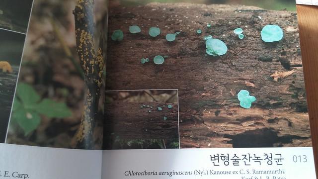 독서노트-버섯생태도감