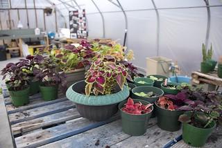 Kirkwood Greenhouse_Sudbury