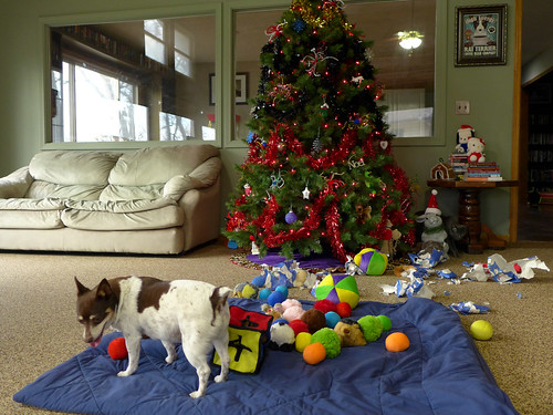 2015-12-25 - Christmas Doggies! - 0105 [flickr]