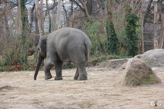 Kurzbesuch im Zoo 20.12.20153