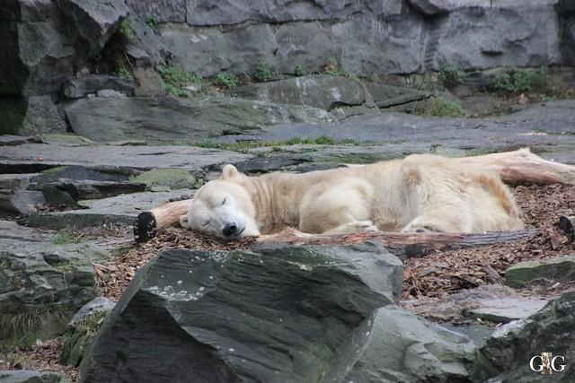1. Feiertag im Tierpark Berlin64