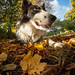 It's Autumn Billy by Larry D James