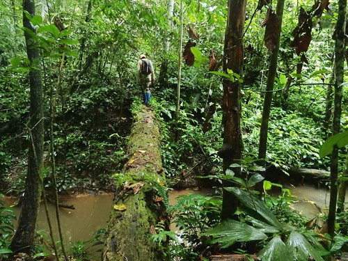 Hiking through Madidi National Park - Amazon forest - Bolivia