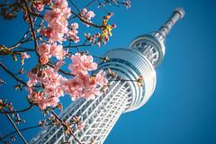 TOKYO SKYTREE_東京スカイツリー_5