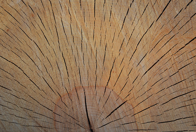 Wood Texture #12