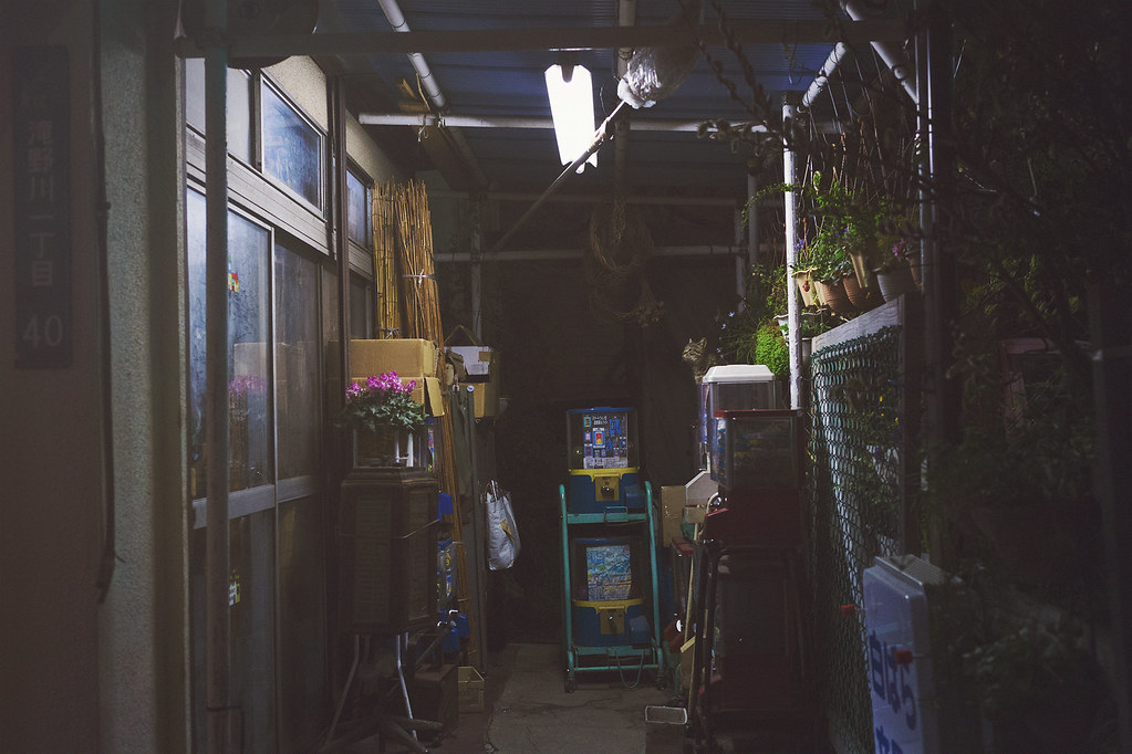 Tokyo de nuit 3 / Chat de tokyo 1