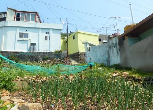 Co-Yeosu-Parc Jansan (12)
