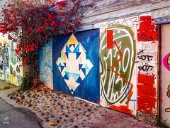 Bougainvilla and graffiti
