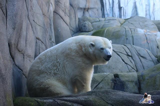 Tierpark Hagenbeck 27.09.2015 087