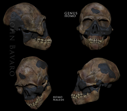 homo Naledi copy