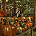 Brown_ County_Pumpkins by Sy_In_Indy
