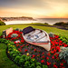 A boat with flowers by Chathura Kodikara