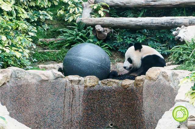 THE GIANT PANDA PAVILION