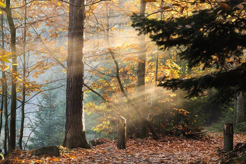 Merveilleuse rando dans les Vosges 22408661909_76cc81c20c_c