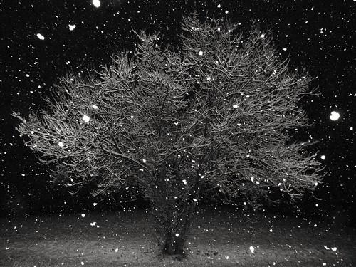 Nevica.....