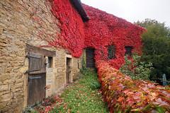 2016-10-24 10-30 Burgund 184 Berze-La-Ville - Photo of Clessé