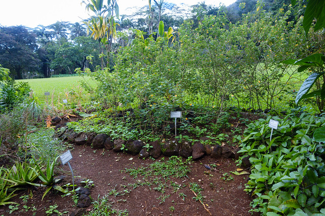 Native Hawaiian garden