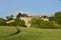 Champs de maïs et le château de Vendoire