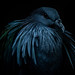 Moody Bird by Brandon_Hilder