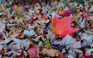 Autumn at Princess Point