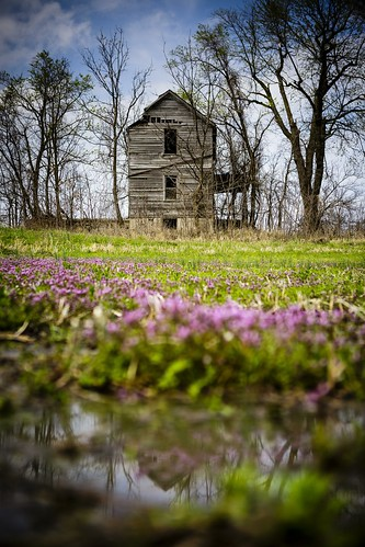 "Notley ""Notley Hawkins"" 10thavenue http://www.notleyhawkins.com/ ""Missouri Photography"" ""Notley Hawkins Photography"" ""Rural Photography"" DoF ""Depth of Field"" rural bucolic ""rural landscape"" purple ""purple blooms"" ""purple flowers"" Henbit weed ""henbit blooms"" weeds ""Chariton County"" Missouri April Spring 2015 ""river bottoms"" ""missouri river bottoms"" ""Forest Green Missouri"" ""Abandoned Farm House"" ""Chariton County Missouri"" abandoned"