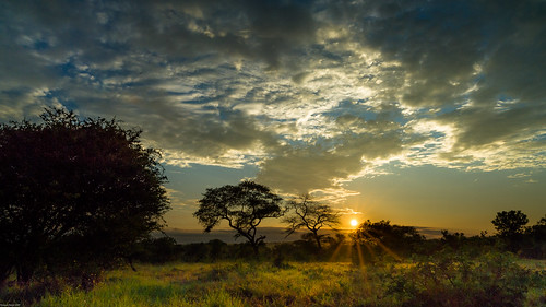 africa trees sky clouds sunrise landscape southafrica outdoor dusk himmel wolken explore mornings dämmerung landschaft distagon carlzeiss bushveld kruegernationalparc distagon2128 distagon2821 distagont2821zf2