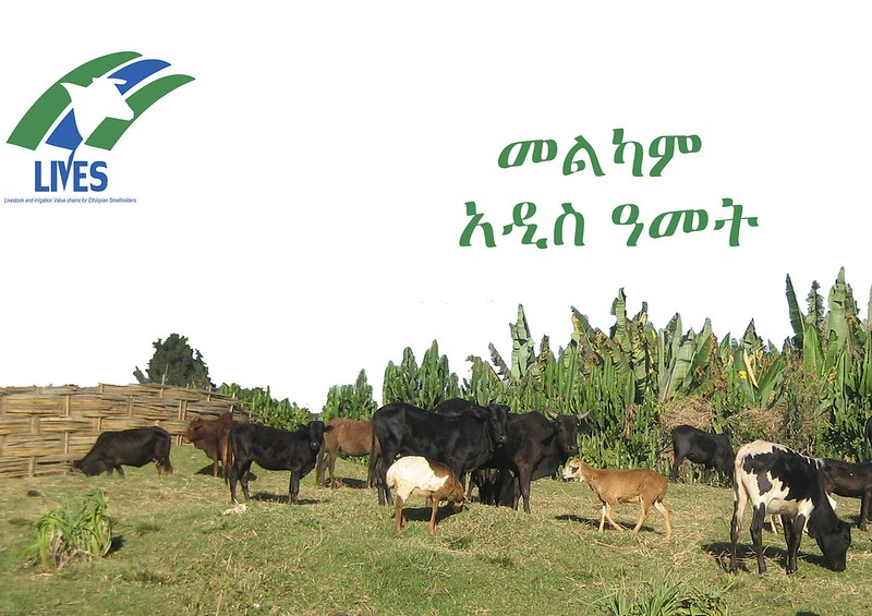 Ethiopian New Year (2007) Greetings Card - LIVES