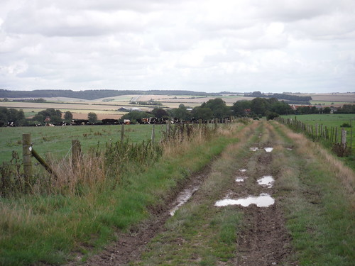 Wessex Ridgeway towards Hindon