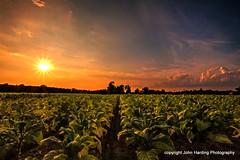 Tobaccoland Sunset