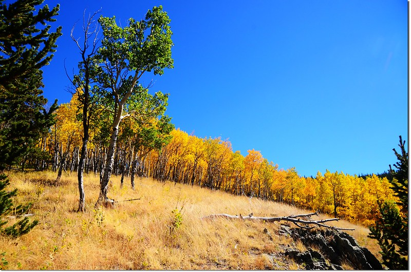 Fall colors at Kenosha Pass, Colorado (18)