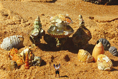 O Reino das Conchas