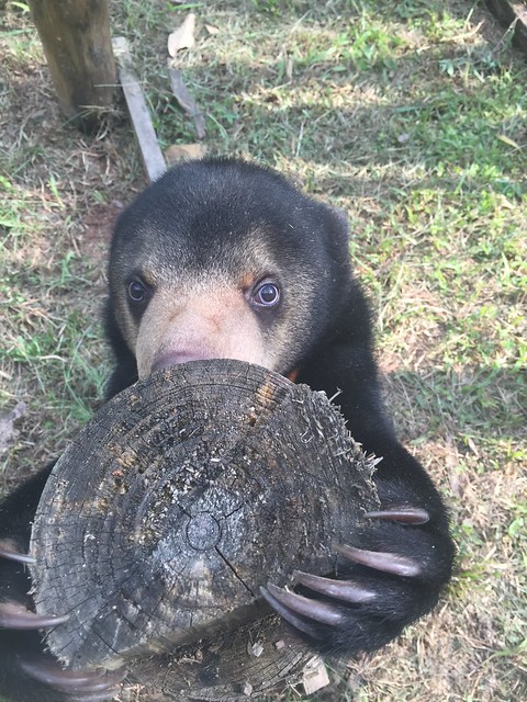 Murphy explores a log at his enclosure 1